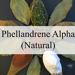 Phellandrene Alpha (Natural)**